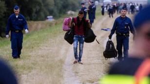 Des migrants interceptés par la police à la frontière hungaro-serbe, le 24 juin 2015.