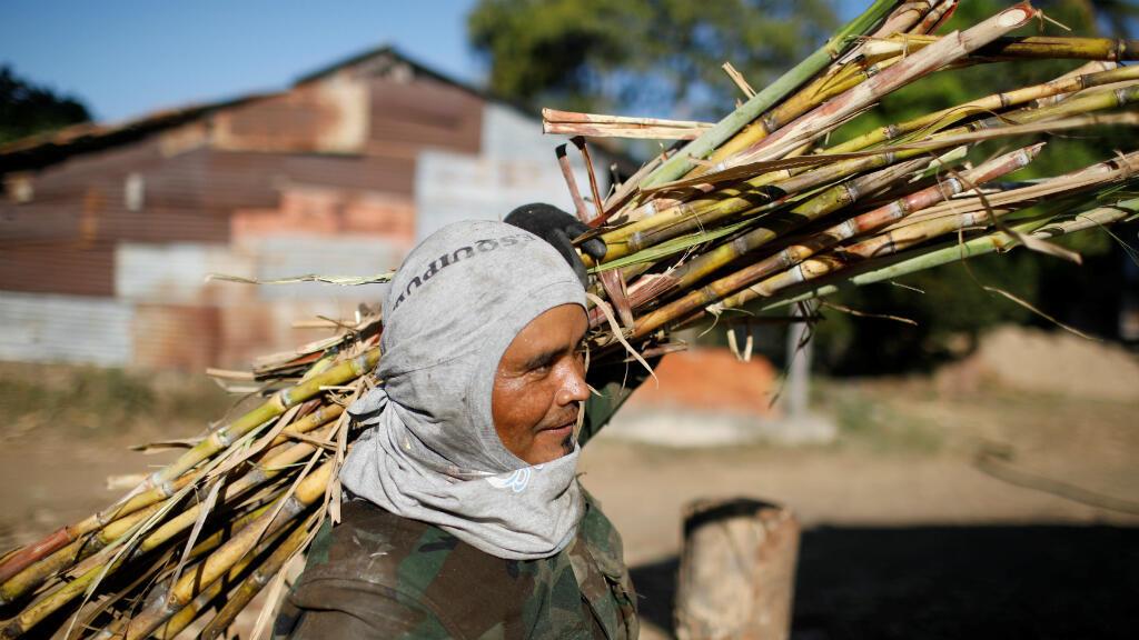 Una trabajador lleva caña de azúcar para ser exprimido en un molino para producir panela en Apastepeque, El Salvador, el 25 de enero de 2019.