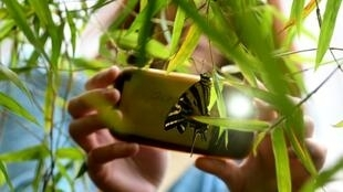 Face au déclin massif de la biodiversité, les chercheurs invitent les vacanciers à récolter des informations sur la biodiversité