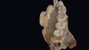 أقدم رفات بشري يعثر عليه خارج أفريقيا.