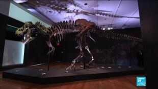 2020-10-06 13:16 T-Rex skeleton auction: Dinosaur remains up for sale