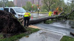 Un árbol cayó en medio de una calle en la ciudad de Halifax, Canadá. 8 de septiembre de 2019.