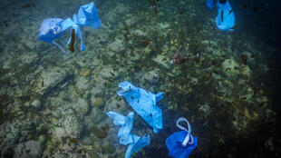 Researchers found the kind of surgical gloves and disposable masks used to ward of COVID-19 along the banks and beaches of rivers across Europe