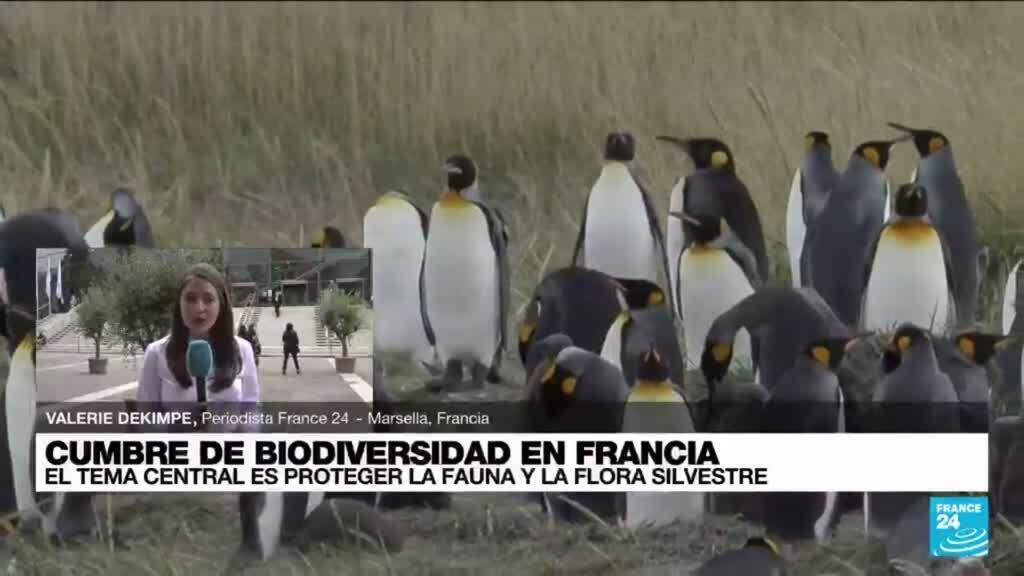 2021-09-03 22:08 Informe desde Marsella: Cumbre de Biodiversidad en Francia traza sus principales objetivos