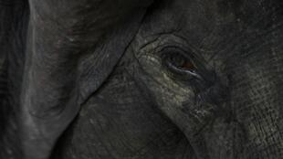 The dead animals are believed to be part of a herd of 30 elephants from the nearby forest reserve