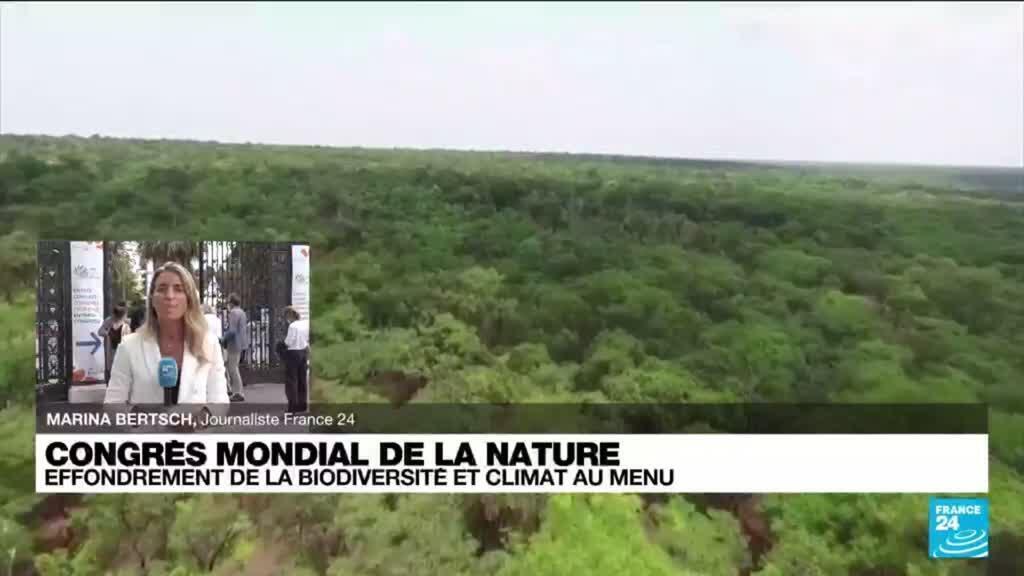 2021-09-03 14:01 Congrès mondial de la nature : effondrement de la biodiversité et climat au menu