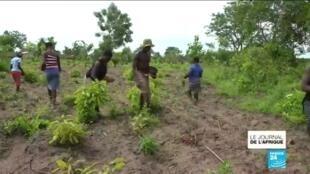 2020-06-08 21:56 Pandémie de Covid-19 Togo : les ventes de produits agricoles s'effondrent