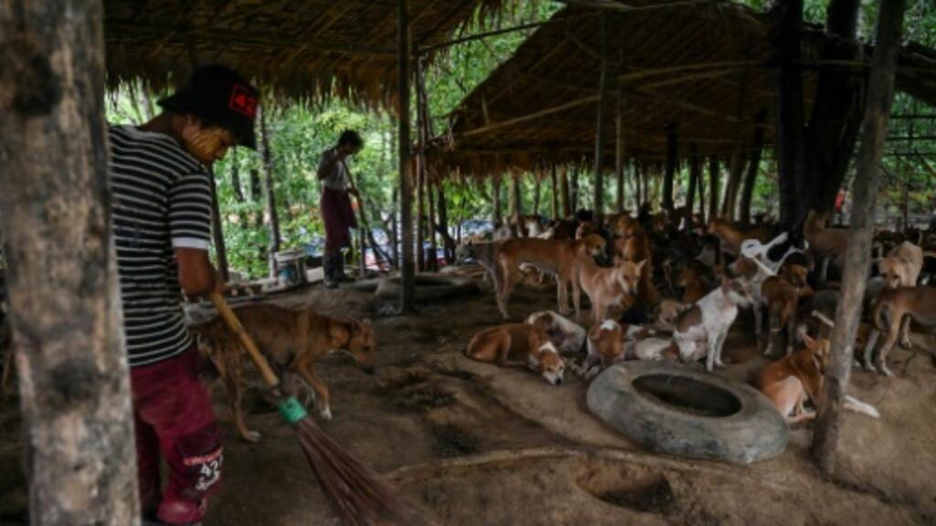 Dharma Dogs: Buddhist chants calm stray Myanmar mutts