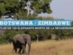 Au Botswana et au Zimbabwe, plus de 150 éléphants sont morts, victimes de la sécheresse