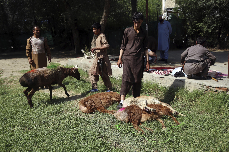 Des hommes abattent des moutons le premier jour de l'Aïd al-Adha à Kaboul, en Afghanistan, le vendredi 31 juillet 2020. Pendant l'Aïd al-Adha, ou fête du sacrifice, il est de coutume que les musulmans abattent des moutons ou du bétail et distribuent des portions de viande aux pauvres.