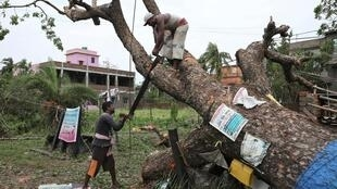 Men cut branches of an uprooted tree in the aftermath of Cyclone Amphan in South 24 Parganas district in the eastern state of West Bengal, India on May 22, 2020.