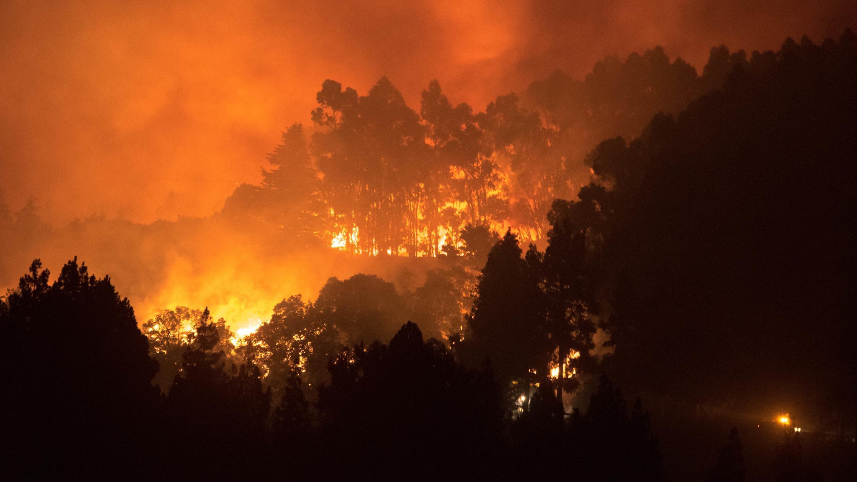 Le feu ravage une forêt de l'île de Grande Canarie, le 17 août 2019.