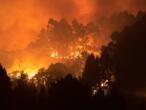 """""""Drame environnemental"""" sur l'île de Grande Canarie, touchée par un incendie"""