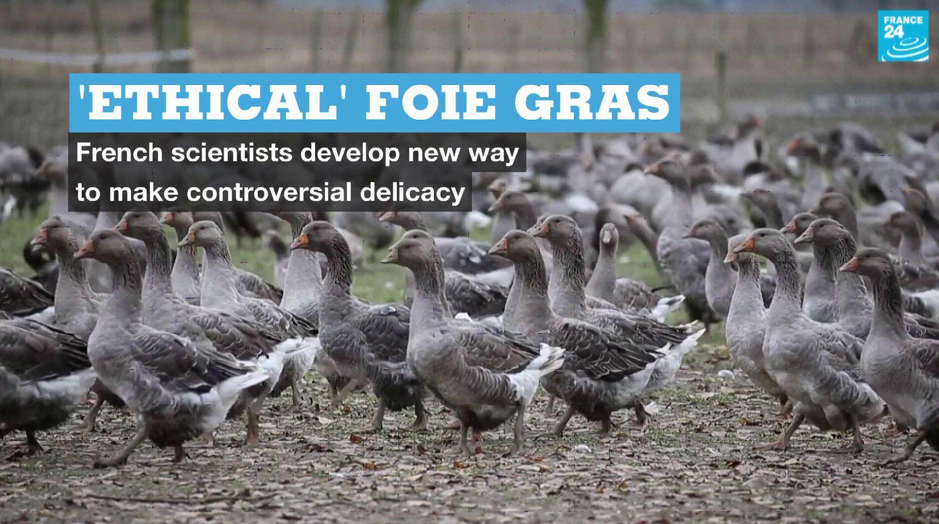 EN Vignette Ethical Foie Gras
