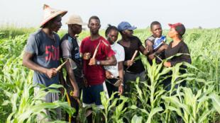 """Plus de 30 jeunes Sénégalais ont découvert les travaux d'une exploitation agricole dans la """"Ferme Factory""""."""