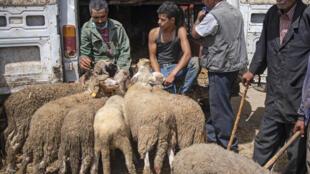 سوق الأضاحي في الصخيرات في المغرب في 26 تموز/يوليو 2020