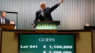 Goffs is Ireland's leading bloodstock auction house