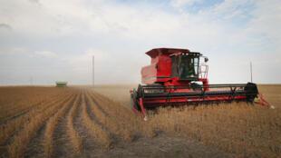 Un champ de soja dans le Minnesota en période de récolte.