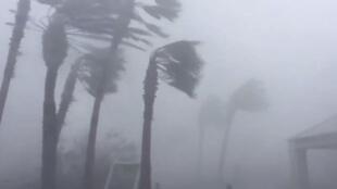 Las palmeras en la ciudad de Panamá, Florida, EE. UU., son azotadas por los vientos del huracán Michael el 10 de octubre de 2018.
