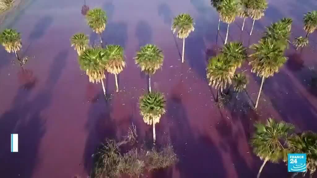 2021-08-18 03:13 Paraguay: bloquean labores de curtiduría por desechos contaminantes