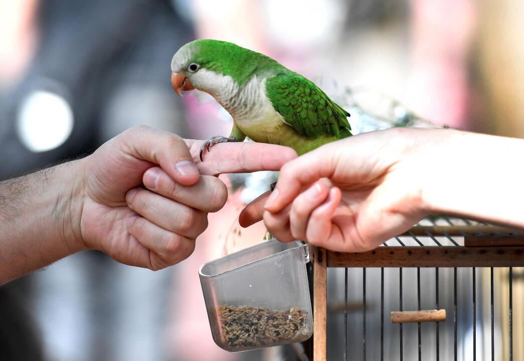 Paris bird market
