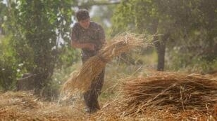 A Syrian man harvests wheat using a sickle in a field near the town of Hamouria in the Eastern Ghouta region on the outskirts of the capital Damascus