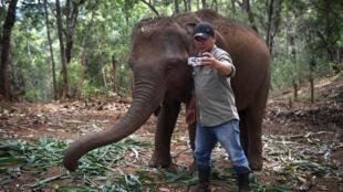El director de la Thai Elephant Alliance Association, Theerapat Trungprakan, se hace un selfi con la elefanta Baifern, que recibe tratamiento para una infección de estómago, el 3 de junio de 2020 en el distrito de Mae Chaem, ene l norte de Tailandia