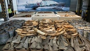 Gangsters and militants take their cut from the illegal trade in ivory, gold and other products