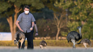 Brazilian President Jair Bolsonaro has been spotted in the gardens of Alvorada Palace feeding -- and occasionally getting bitten by -- rheas, a South American bird related to the emu