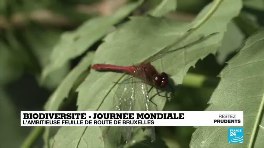 2020-05-22 14:18 Journée mondiale de la biodiversité : l'ambitieuse feuille de route de Bruxelles
