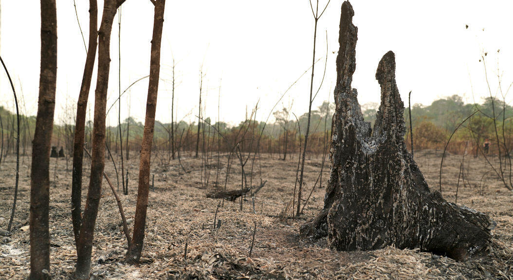 Agosto fue el mes con más incendios desde 1988 en el Estado de Amazonas, el más extenso de Brasil. Foto de Louise Raulais