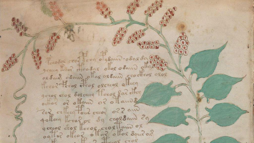 La partie haute de la page 17v du manuscrit de Voynich