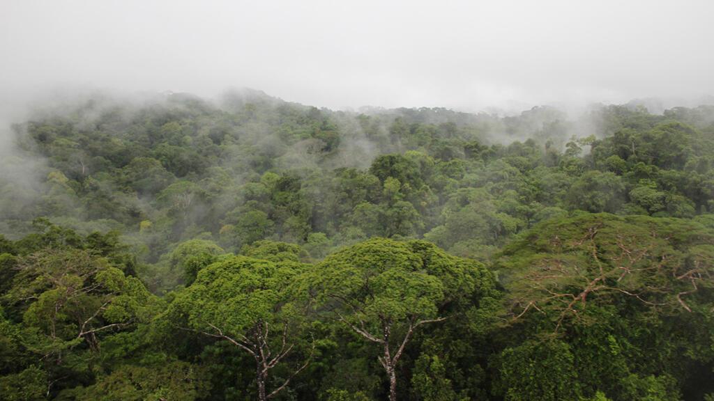 La reserva Indio Maíz es considerada una de las reservas naturales mejor preservadas de Nicaragua.