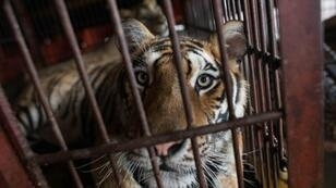 Approved with support from left-wing and right-wing lawmakers, the law brings Portugal in line with dozens of other countries to ban wild animals in circus acts