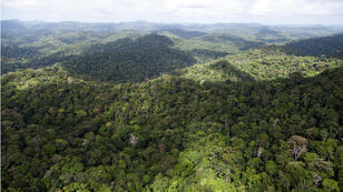 Se estima que el 96% del territorio de Guayana francesa está cubierto por selva. Foto tomada en el sector de Dorlin, en el sur del departamento, el 1 de diciembre de 2012.