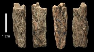 University of Oxford/Max Planck Institute images of a bone fragment of a female -- known as 'Denisova 11' ? born of a Neanderthal mother and a Denisovan father. The bone was found in 2012 by Russian archaeologists at Denisova Cave in Siberia.