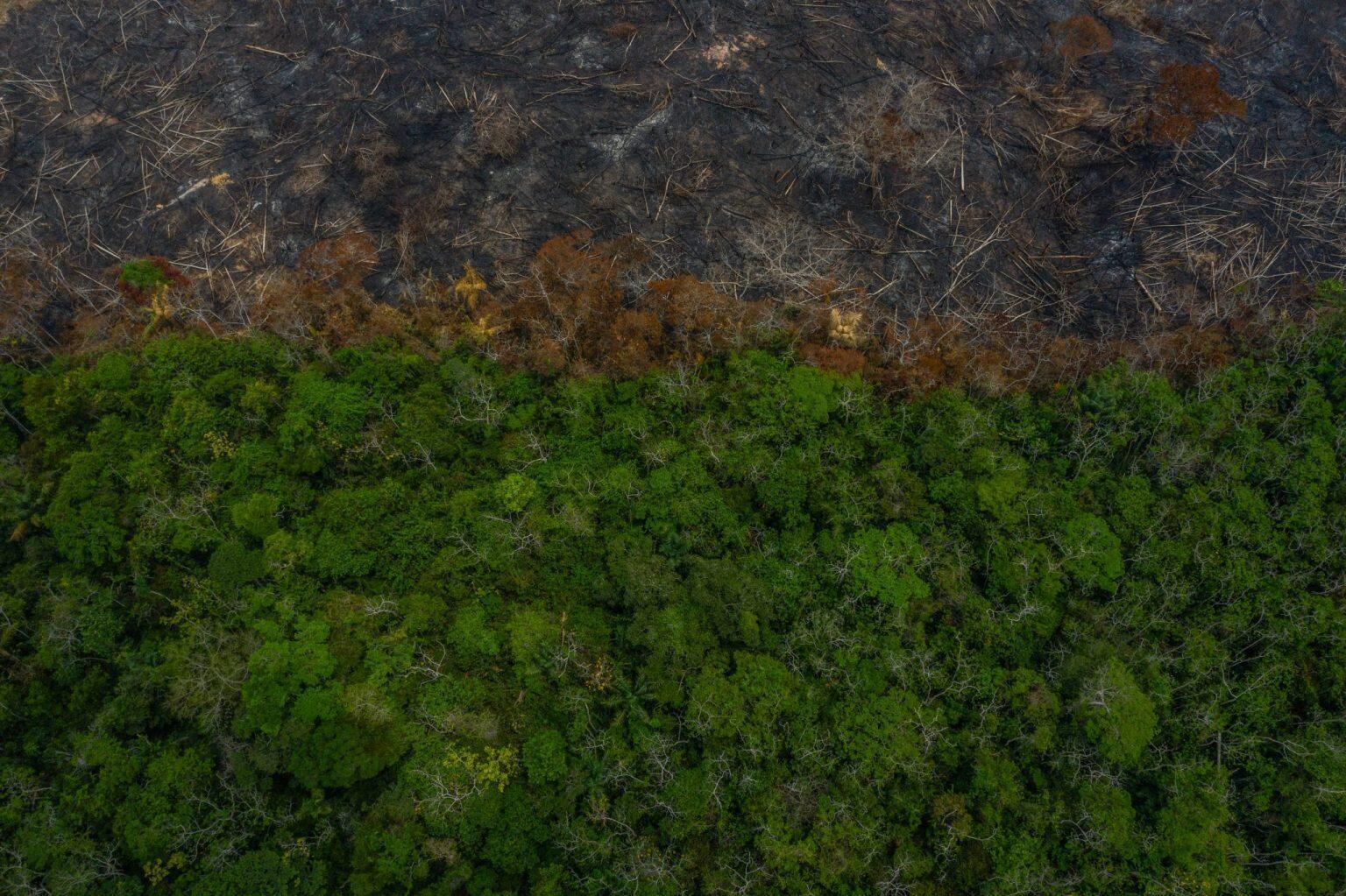 La frontera entre la selva virgen y los restos que dejan los incendios habla por sí misma del terreno que los humanos le ganan todos los días a uno de los entornos ambientales más ricos del planeta. De acuerdo con un reporte de 2019 del proyecto Monitoring the Andean Amazon (MAAP), 'la deforestación continúa en la Amazonía colombiana (2019)', el noroeste de la Amazonía colombiana perdió, entre enero y mayo de ese año, más de 56.000 hectáreas de bosque.