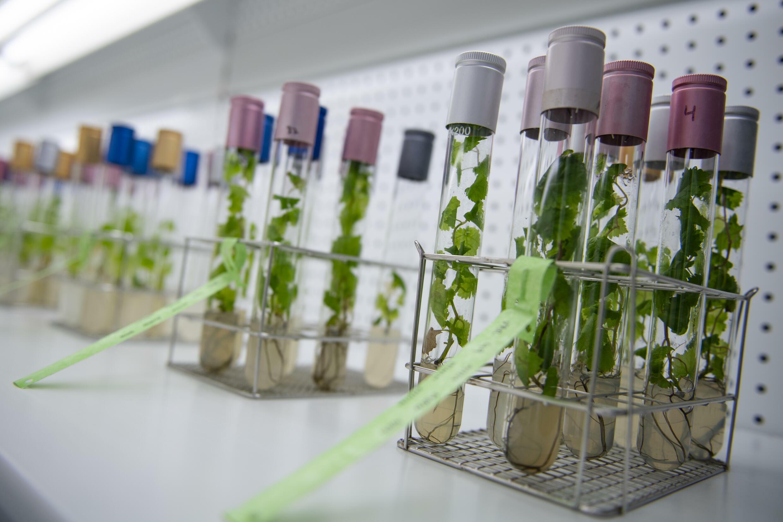 Una de las formas en que los productores están tratando de adaptarse al aumento de las temperaturas es reviviendo cepas de uva que funcionan bien en altitudes más altas.