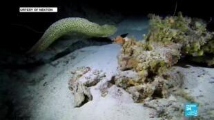 2020-02-05 12:43 Exploring the 'Midnight zone': plastics, debris found 11,000 metres deep in the Indian ocean