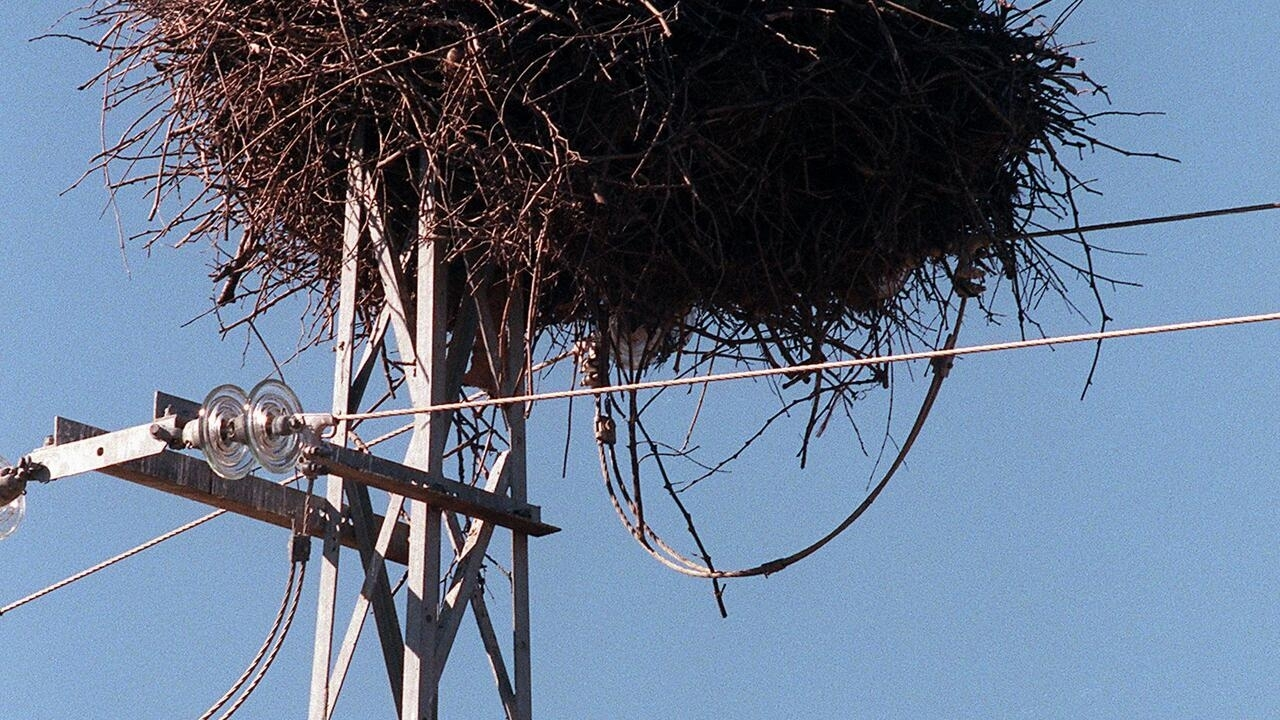 Energy giant sued as Spain power lines kill 100s of birds - France 24