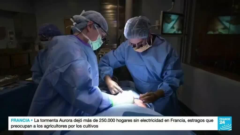 2021-10-21 15:10 Trasplantan con éxito el riñón de un cerdo a un cuerpo humano