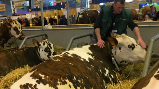 Simon (who did not give a last name), a 32-year-old dairy and grain farmer from the eastern Rhône region, tends to his cattle at the 2017 International Agriculture Fair in Paris.
