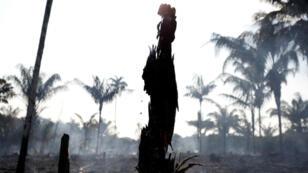 Une partie de la forêt amazonienne brûlée à proximité d'Iranduba, dans l'État d'Amazonas, le 20août2019.