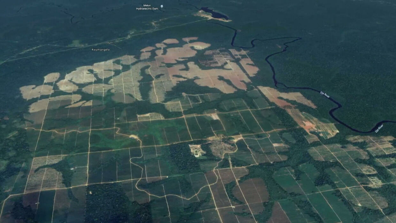 Reporters - L'hévéa, arme de déforestation massive au Cameroun
