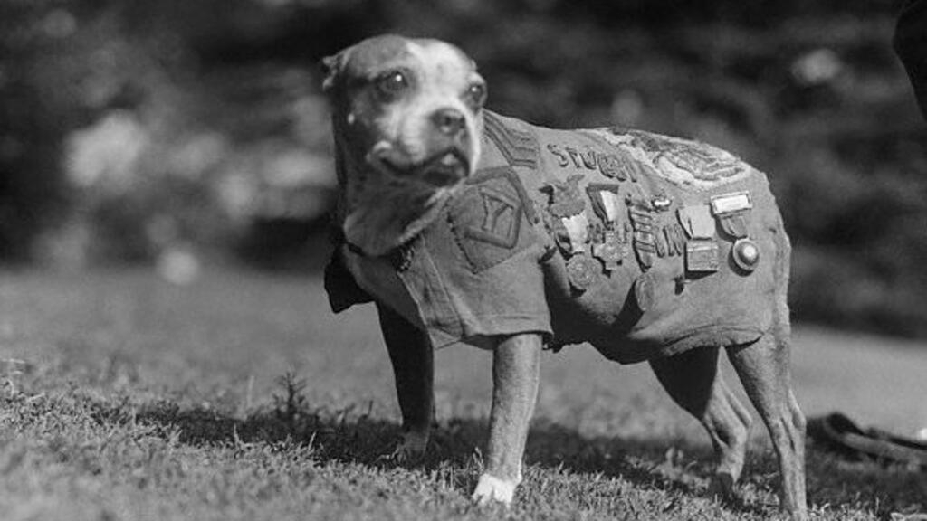 Sergeant Stubby: The dog that fought to liberate France in WWI