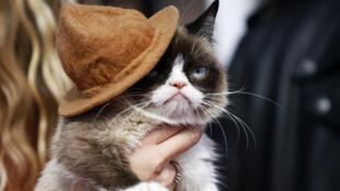 """""""Grumpy Cat"""" aux MTV Movie Awards à Los Angeles, en Californie, le 13 avril 2014."""