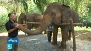 2020-03-14 02:21 في عمق الحدث / ركوب الفيلة في تايلاند: بين السياحة وسوء المعاملة