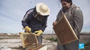 """Los internos del penal de Cipolletti sostienen que se """"olvidan"""" de que están en el penal cuando se dedican a la apicultura. Por su parte, el personal carcelario ve en el taller una influencia positiva en el ambiente del recinto."""