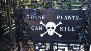 """Les jardins du château d'Alnwick en Angleterre abrite un """"jardin empoisonné"""" avec une centaine de plantes mortelles."""