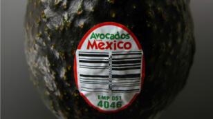 L'immense majorité des avocats consommés aux États-Unis provient du Mexique.